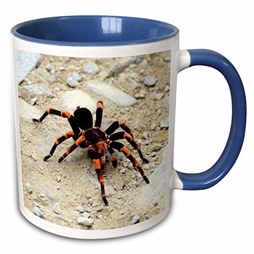 3dRose 141713_6Tarantula spider Monteverde Cloud Forest Costa Rica-SA22 MGL0011-Miva Stock Mug 11 oz Blue