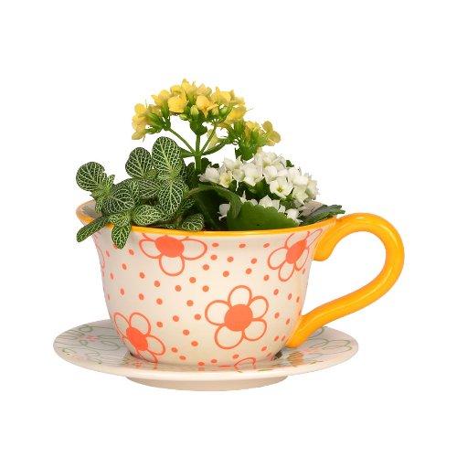 Daisy Fields Garden Teacup Planter