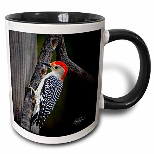 3dRose Angel Wings Designs General Wildlife - Birds - Red Belly Woodpecker Original Art Home Décorl - 11oz Two-Tone Black Mug mug_48671_4