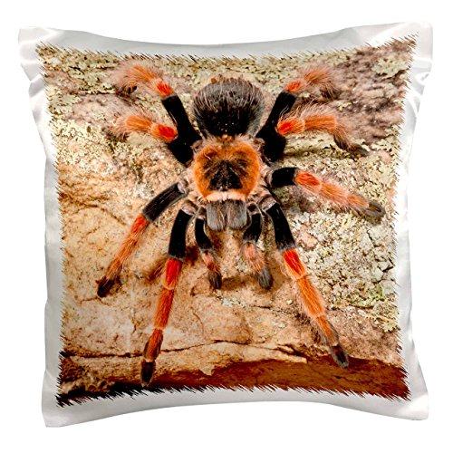 3dRose pc_140139_1 Mexican Painted Leg Tarantula Spider Na02 Dno0853 David Northcott Pillow Case 16 x 16