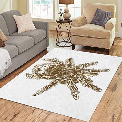 Semtomn Area Rug 2 X 3 Animal Antique Engraving of Tarantula Spider Arachnid Biology Bird Home Decor Collection Floor Rugs Carpet for Living Room Bedroom Dining Room