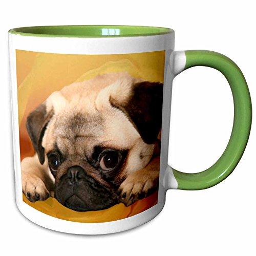 3dRose Dogs Pug - Pug - 11oz Two-Tone Green Mug mug_3644_7